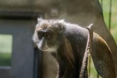 005-monkeycentre2014