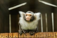 007-monkeycentre2014