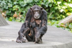 010-monkeycentre2014
