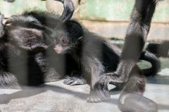 011-monkeycentre2014