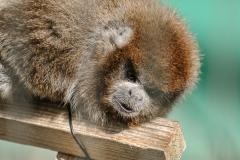 012-monkeycentre2014