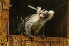013-monkeycentre2014