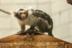 014-monkeycentre2014