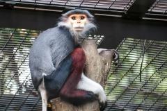 032-zoorasiayokohama2014