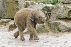 004-dierenparkemmen2015mrt