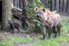 002-dierenparkamersfoort2016