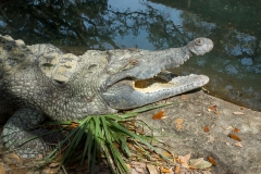 003-alligatorfarm2017