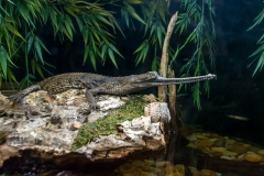 022-alligatorfarm2017