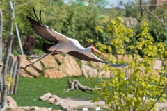 012-zooparcdebeauval2017