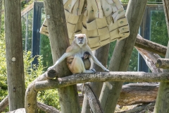 016-zooparcdebeauval2017