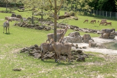 020-zooparcdebeauval2017