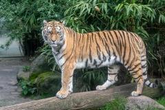 012-dierenparkamersfoort2019