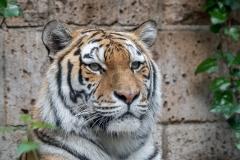013-dierenparkamersfoort2019