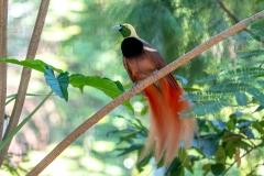 012-jurongbirdpark2019feb25