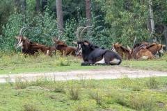 008-safariparkbeeksebergen2019okt
