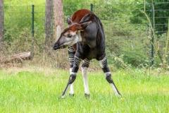 011-safariparkbeeksebergen2019okt