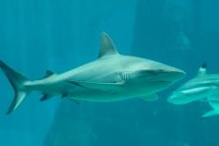 002-sea-aquarium2019