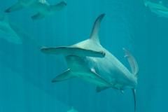 004-sea-aquarium2019