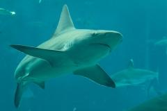 005-sea-aquarium2019