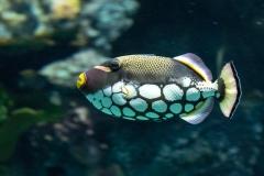 007-sea-aquarium2019