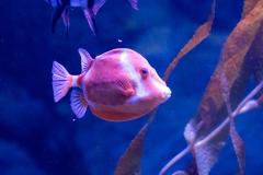 008-sea-aquarium2019